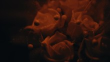 A Small Bouquet Of Decorative White Roses Cast Under An Orange Light While