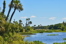 Lake And Forest View At Orlando Wetlands Florida