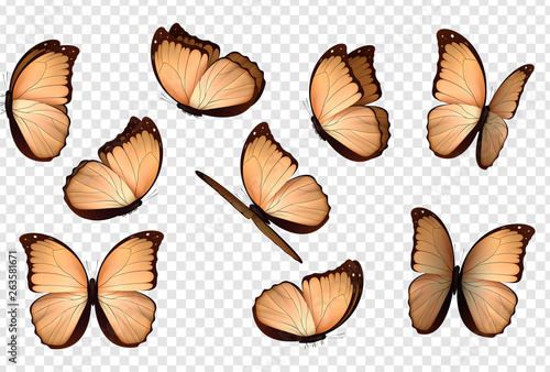 Obraz na plátně  Butterfly vector. Peach colour isolated butterflies.