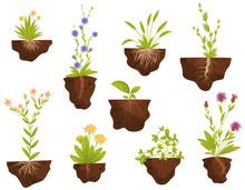 Set Of Flowering Plants With R...