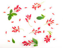 Barberries With Leaves On The White Backgrounds