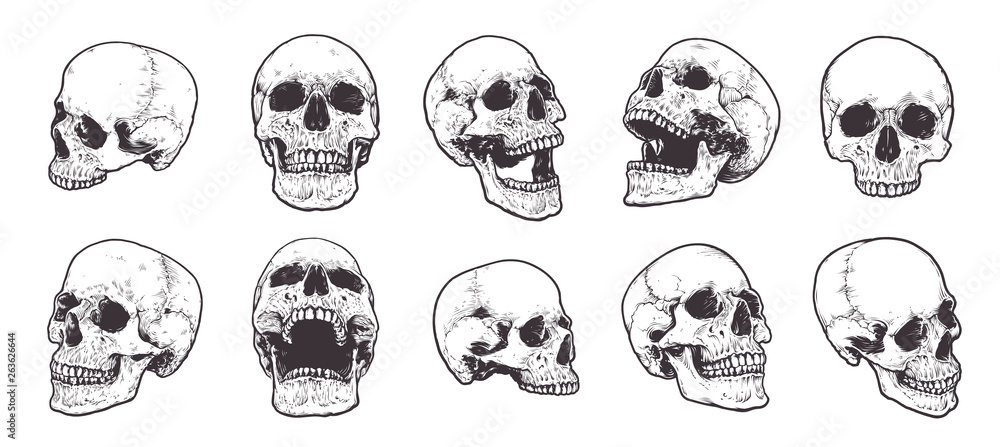 Fototapeta Anatomical Skulls Vector Set