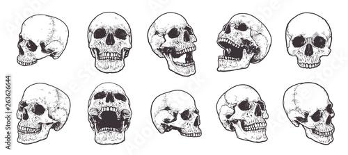 Photo Anatomical Skulls Vector Set