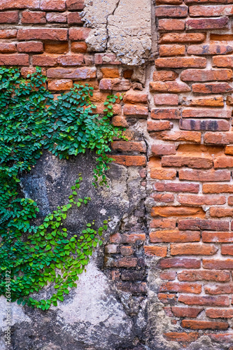 Okleiny na drzwi cegła  old-red-brick-wall-texture-and-green-leaf-hanging-down-on-it-at-the-edge-copy-space-background