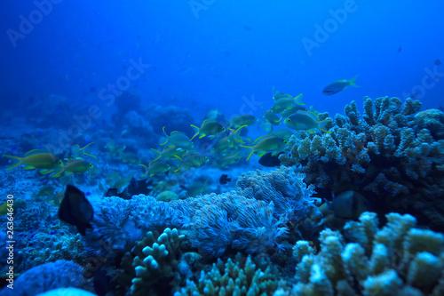 Fototapeta coral reef underwater / sea coral lagoon, ocean ecosystem obraz na płótnie