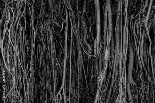 korzenie
