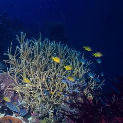 Fototapeta na wymiar coral reef underwater / lagoon with corals, underwater landscape, snorkeling trip