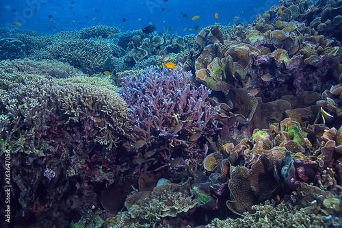 Poster Sous-marin underwater sponge marine life / coral reef underwater scene abstract ocean landscape with sponge