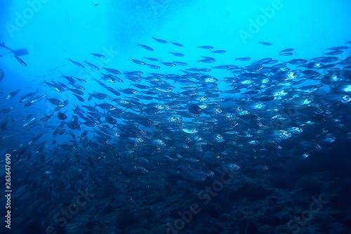 Foto auf Gartenposter Turkis lot of small fish in the sea under water / fish colony, fishing, ocean wildlife scene