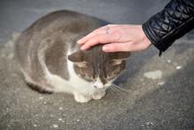Hand Strokes A Street Cat