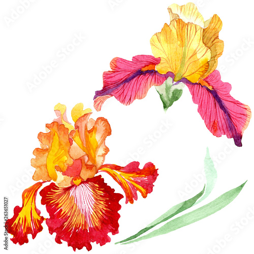 Fotografie, Obraz  Red Bold encounter iris floral botanical flowers
