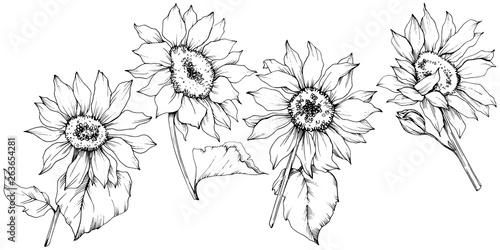 Fotografie, Obraz Vector Sunflower floral botanical flowers