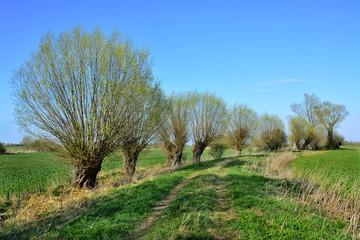 piękny wiosenny krajobraz, drzewa