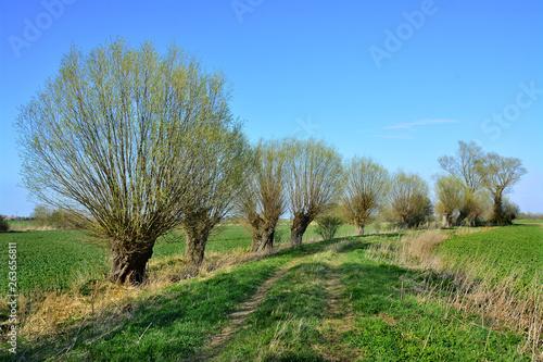 Obraz piękny wiosenny krajobraz, drzewa - fototapety do salonu