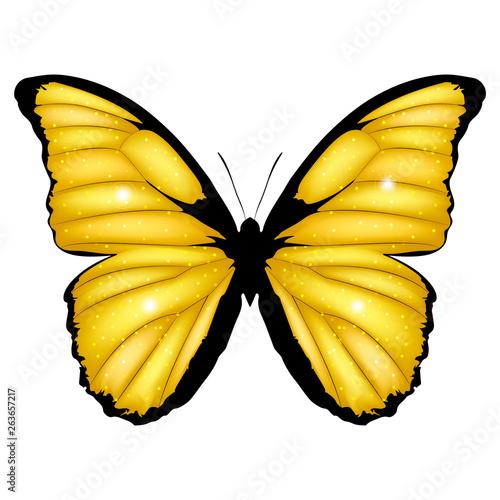 Tablou Canvas Golden Butterfly