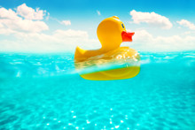 Rubber Duckling Floating In Wa...