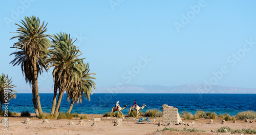 two Egyptian girls riding camels ride along the coast of the Red Sea Billede på lærred