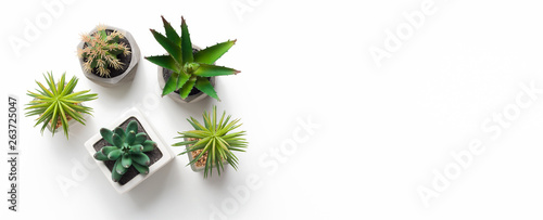 Obraz na plátně Different succulent and cacti plants in pots on white background