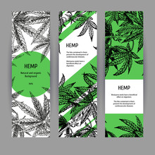 Banners With Hemp Leaves. Black-white Design With Marijuana. Vector Illustration