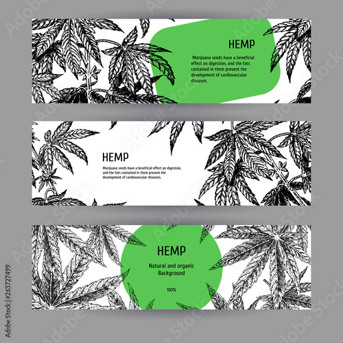 Fototapeta Banners with hemp leaves. Black-white design with marijuana. Vector illustration obraz