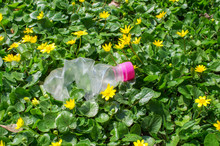 Discarded Plastic Bottle In The Grass With Yellow Flowers