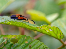 Macro Photography Of One Young...