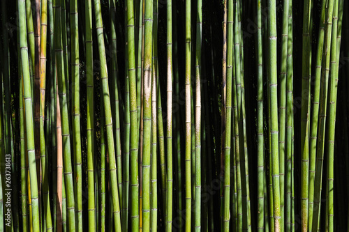 Keuken foto achterwand Bamboo Bamboo forest. No people