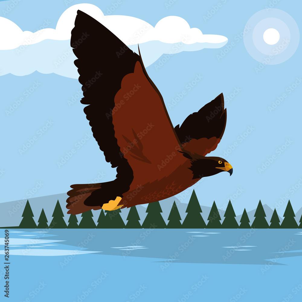 Fototapeta beautiful eagle in the lake majestic bird