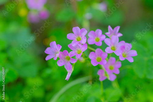 Close Up Of Small Beauty Cute Pink Purple Flowers Inthe Garden With Green Leaf Nature Background Plant Flower And Natural Concept Buy This Stock Photo And Explore Similar Images At Adobe,Goodwill Furniture Donation Drop Off