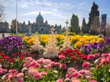 Springtime Blooming Flowers In...