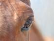 Red horse eye