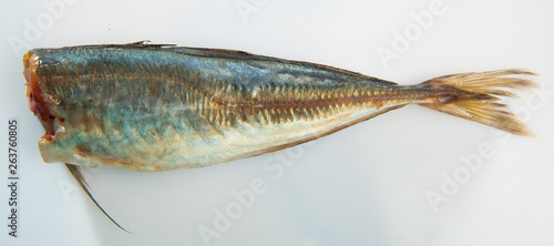 Valokuva  Atlantic horse mackerel on white surface