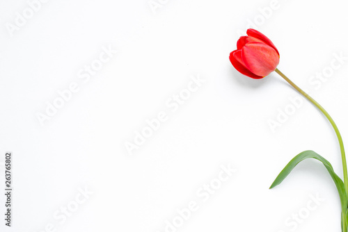Keuken foto achterwand Tulp Beautiful blossom tulips on a light background. Tulip concept. Flower and spring poster. Floristics, natural scenery and decoration. Botanical and floral card. Empty place for text