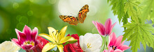 Image Of Flowers And Butterflies In The Garden