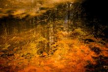 Vivid Pond Reflections
