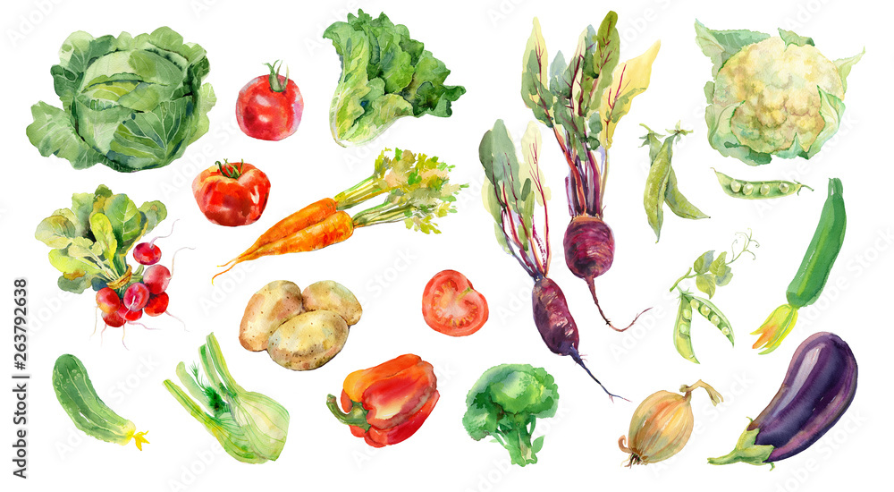 Fototapety, obrazy: Watercolor painted collection of vegetables. Fresh colorful veggies background