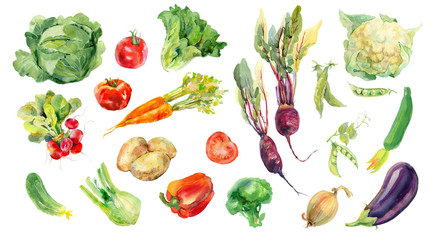 FototapetaWatercolor painted collection of vegetables. Fresh colorful veggies background