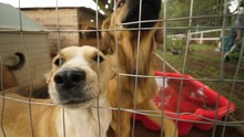 Curious Dog Shelter Dogs Excitingly Sniffing At Camera While Wagging Tails On A Bright Day