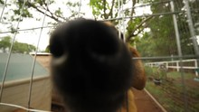Curious Dog Shelter Dogs Excitingly Sniffing At Camera While Wagging Tails On A Bright Day In Realtime