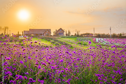 Photo  Landscape of blooming lavender flower field with beautiful house on mountain under the red colors of the summer sunset