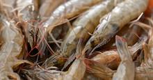 Stack Of Fresh Shrimp