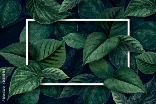 Poster Vegetal Forest leaf frame