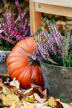 Autumn Decorations With Pumpki...