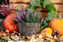 Autumn Decorations With Pumpkins And Heather (erica).