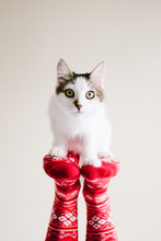 Kitten On Socks