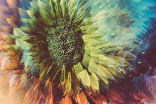 Prismatic Images Of A Sunflower