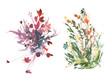 Watercolor drawing green grass and flowers, painted wild plants. Set with wild plant . flowers in green grass, painted botanical illustration in vintage style, color floral composition.