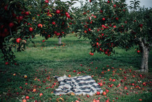 A Basket And Rug In An Orchard
