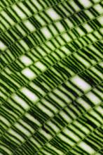 Remarkable Mosaic Leaf Macro
