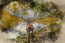 Watercolor Painting Of Stunning Powerful Red Deer Stag Looks Out Across Lake Towards Mountain Landscape In Autumn Scene